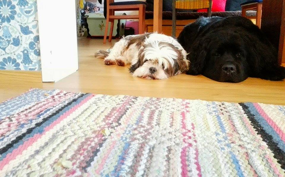 lazy dogs.jpg