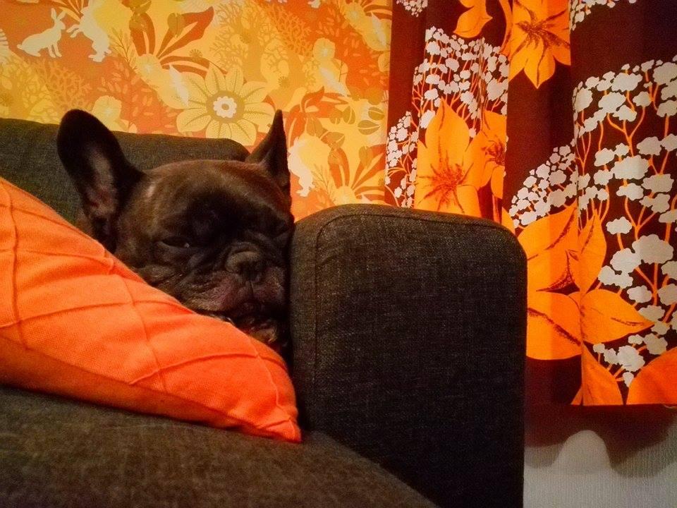 nukkuva koira.jpg