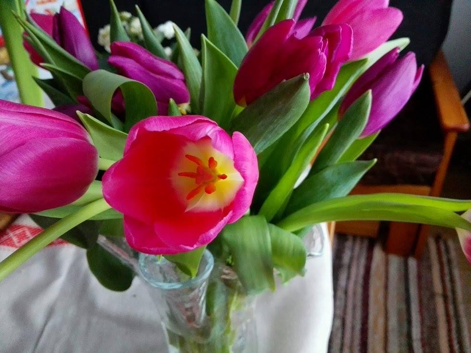 tulppaani kukkakuva asetelma.jpg