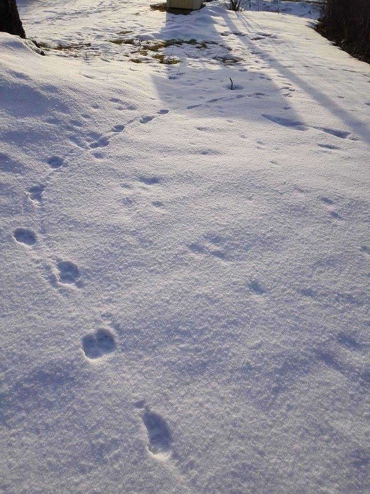 jäljet lumella.jpg