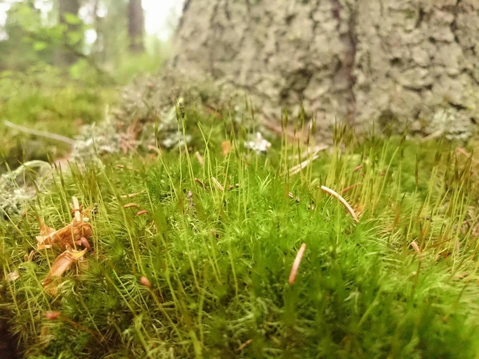 Metsästä ja riimuista