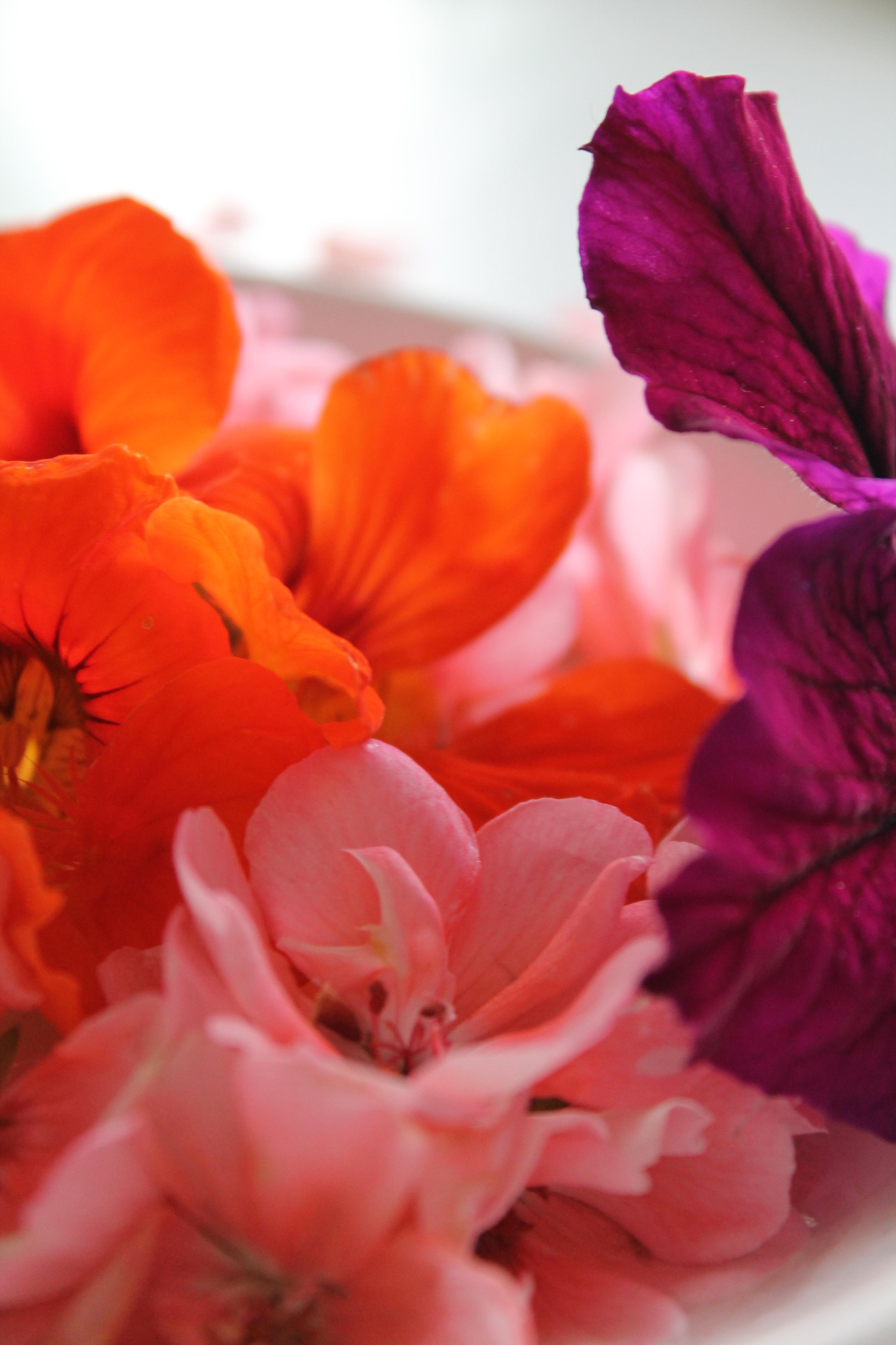 flower offering lähikuvat 019.JPG