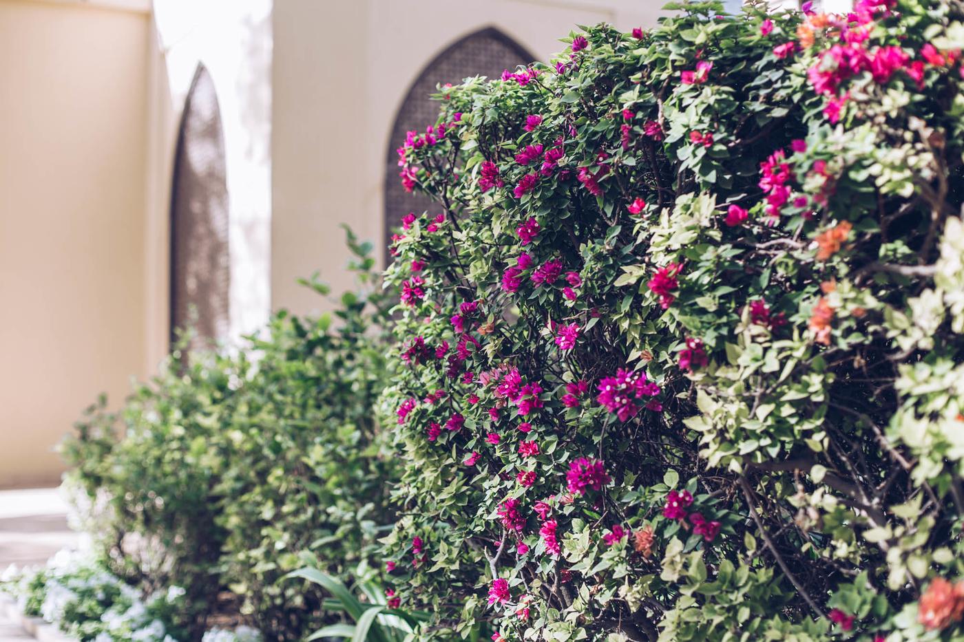 Dubai Photo Diary-26.jpg