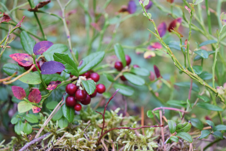 mökkillä syksyllä6.jpg