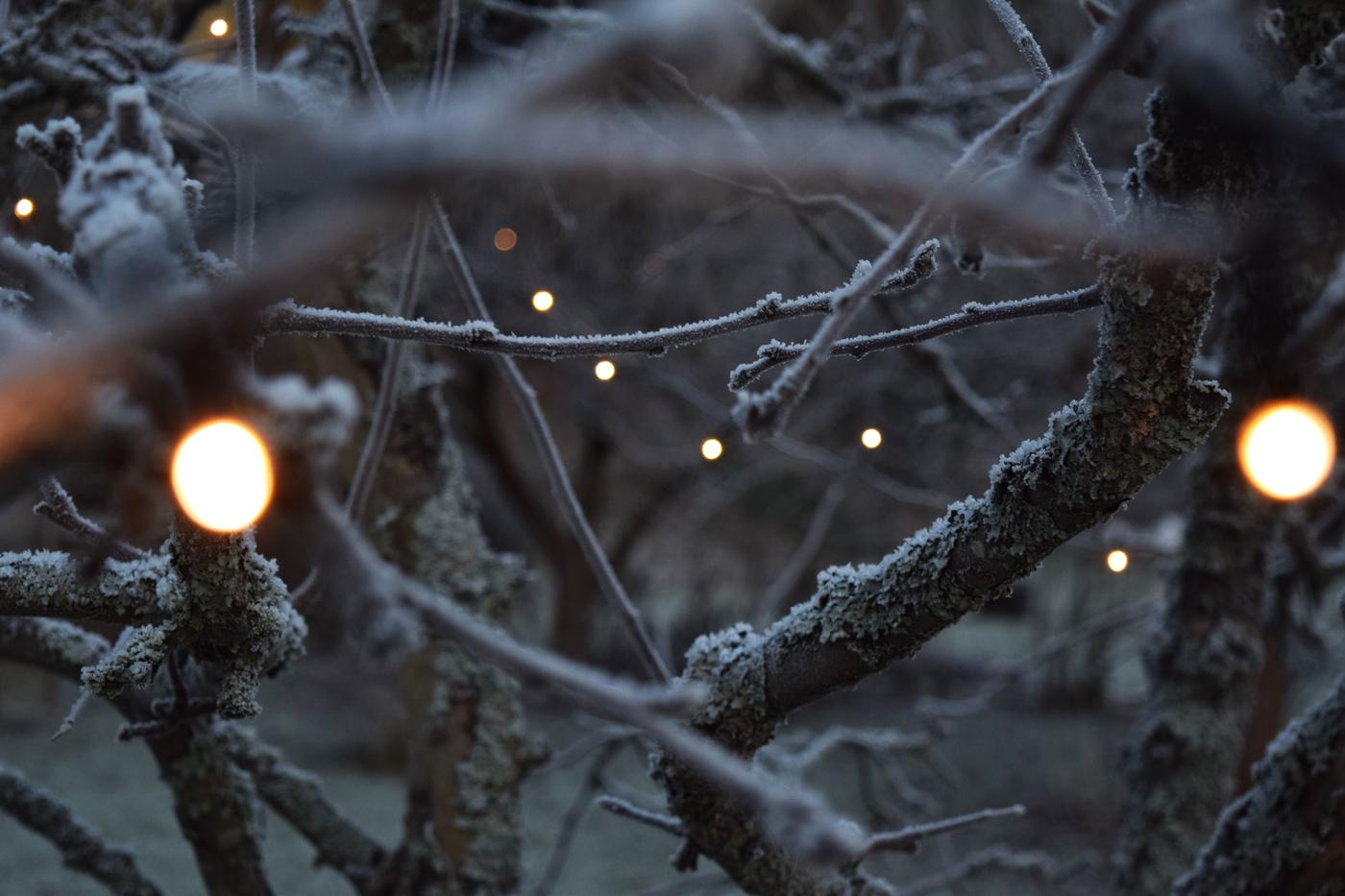 joulukuun valo4.jpg