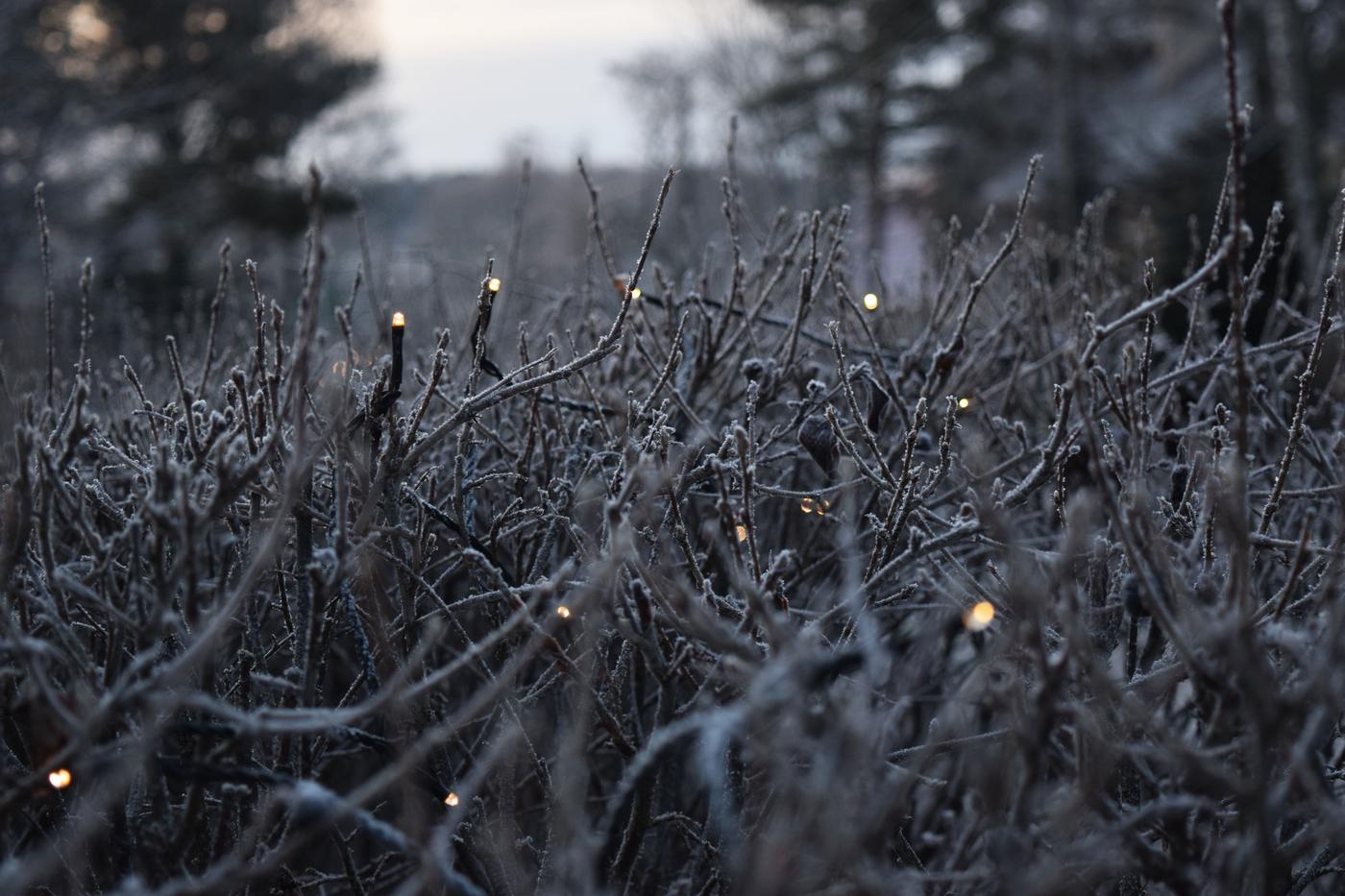 joulukuun valo6.jpg