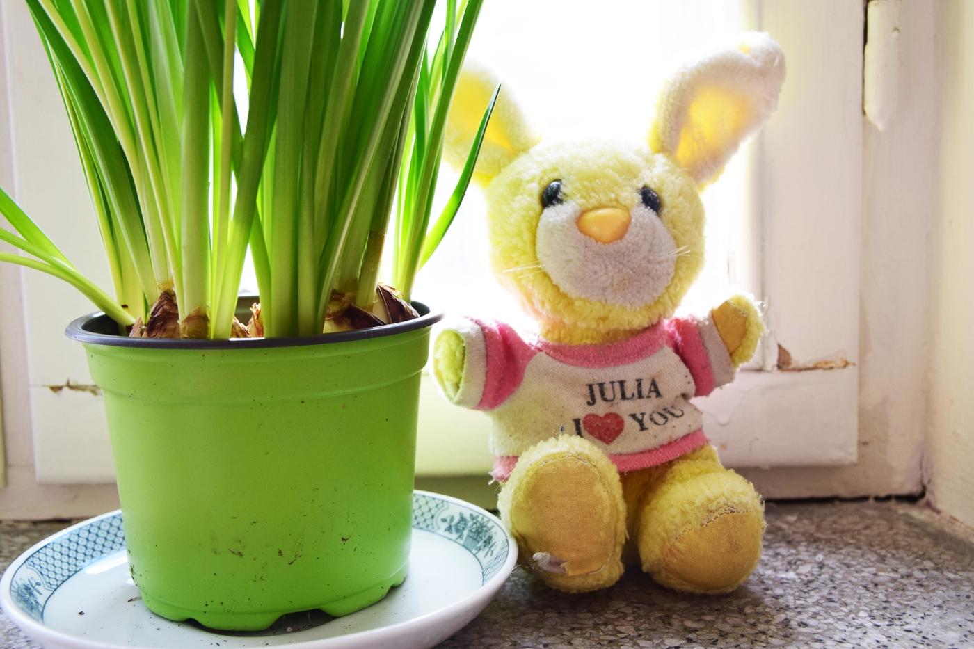 kukka ja pupu4.jpg