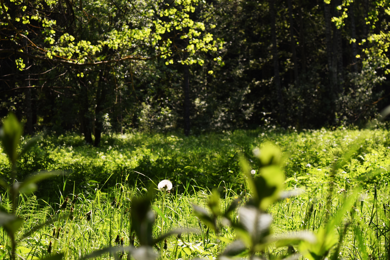 keväinen niitty.jpg