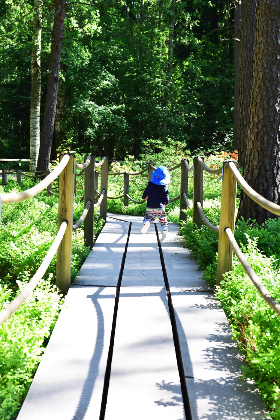 alppiruusupuisto2.jpg