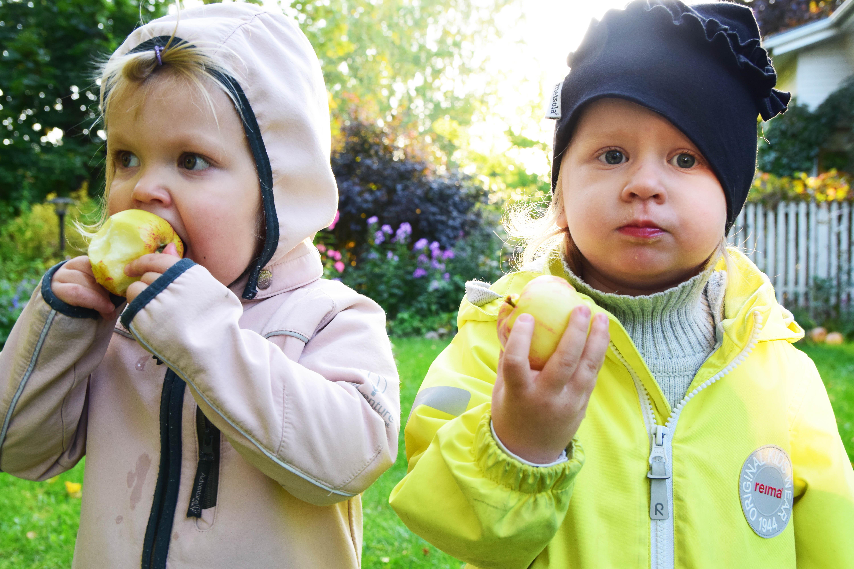 lapset syövät omppuja2.jpg