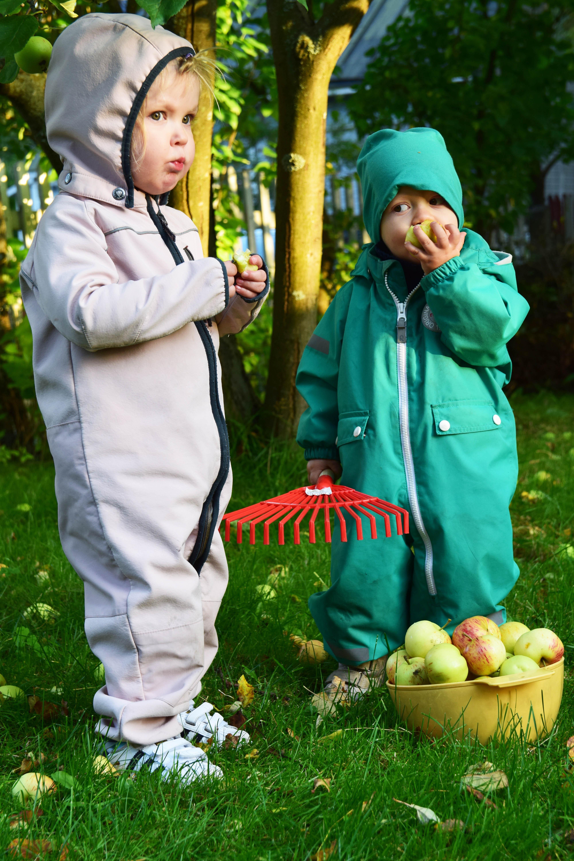 lapset syövät omppuja8.jpg