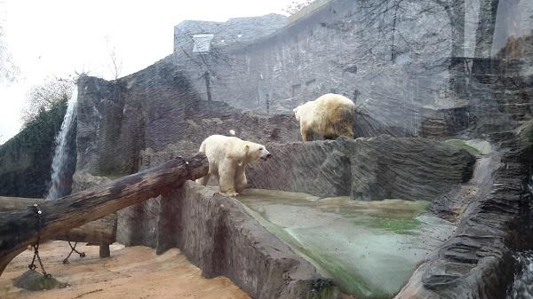 Komeat jääkarhut olivat pirteällä tuulella.