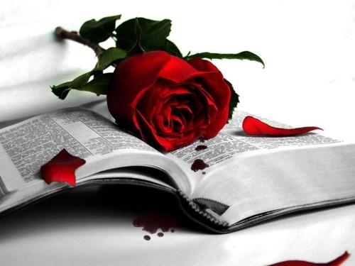 Kirjan ja ruusun päivän menovinkkejä?