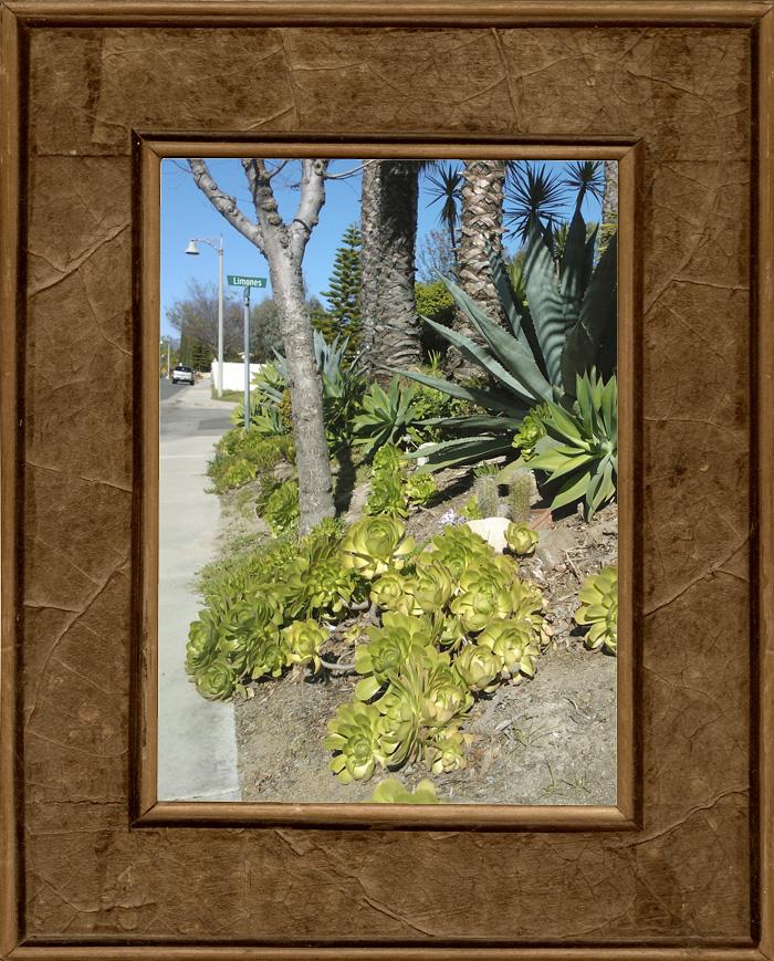 kaktuksia.jpg