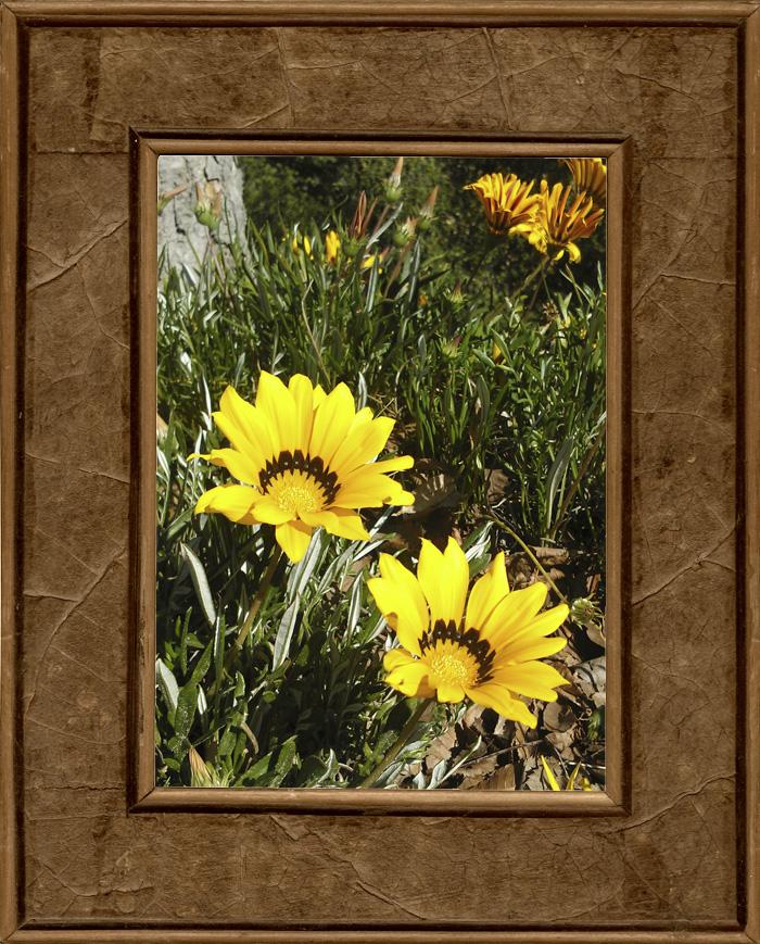 kukkaset.jpg