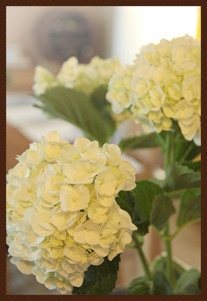 kukkaset2.jpg