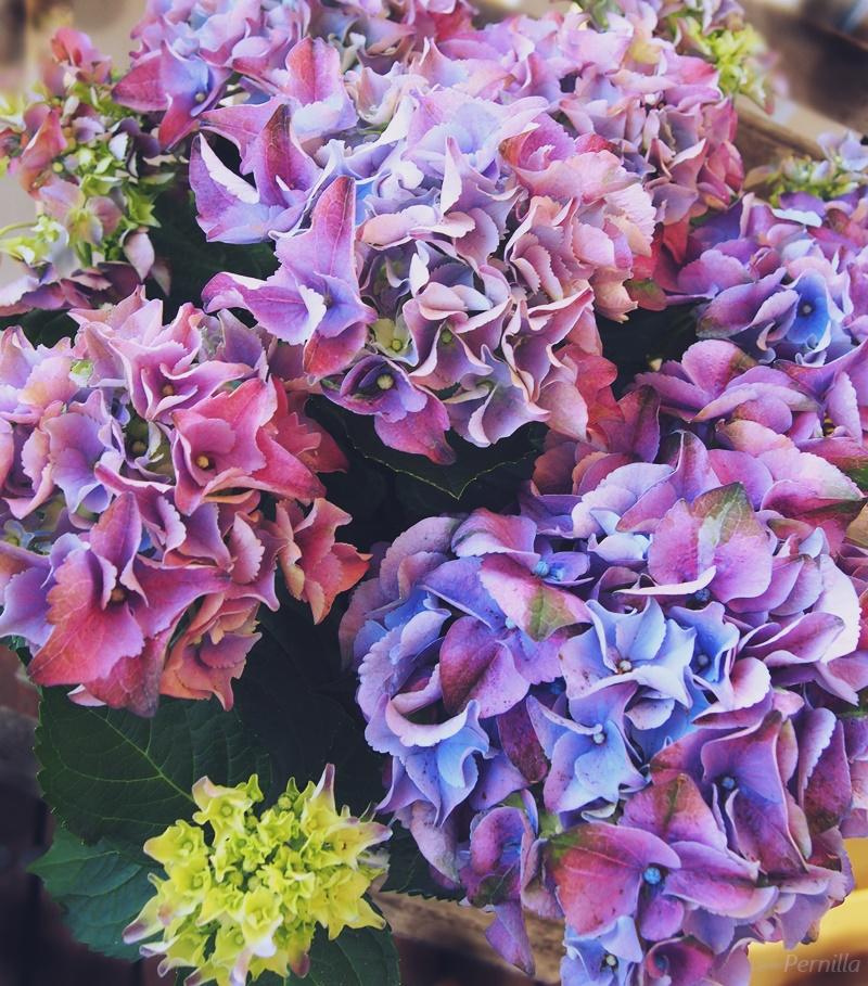 kukkia8.JPG