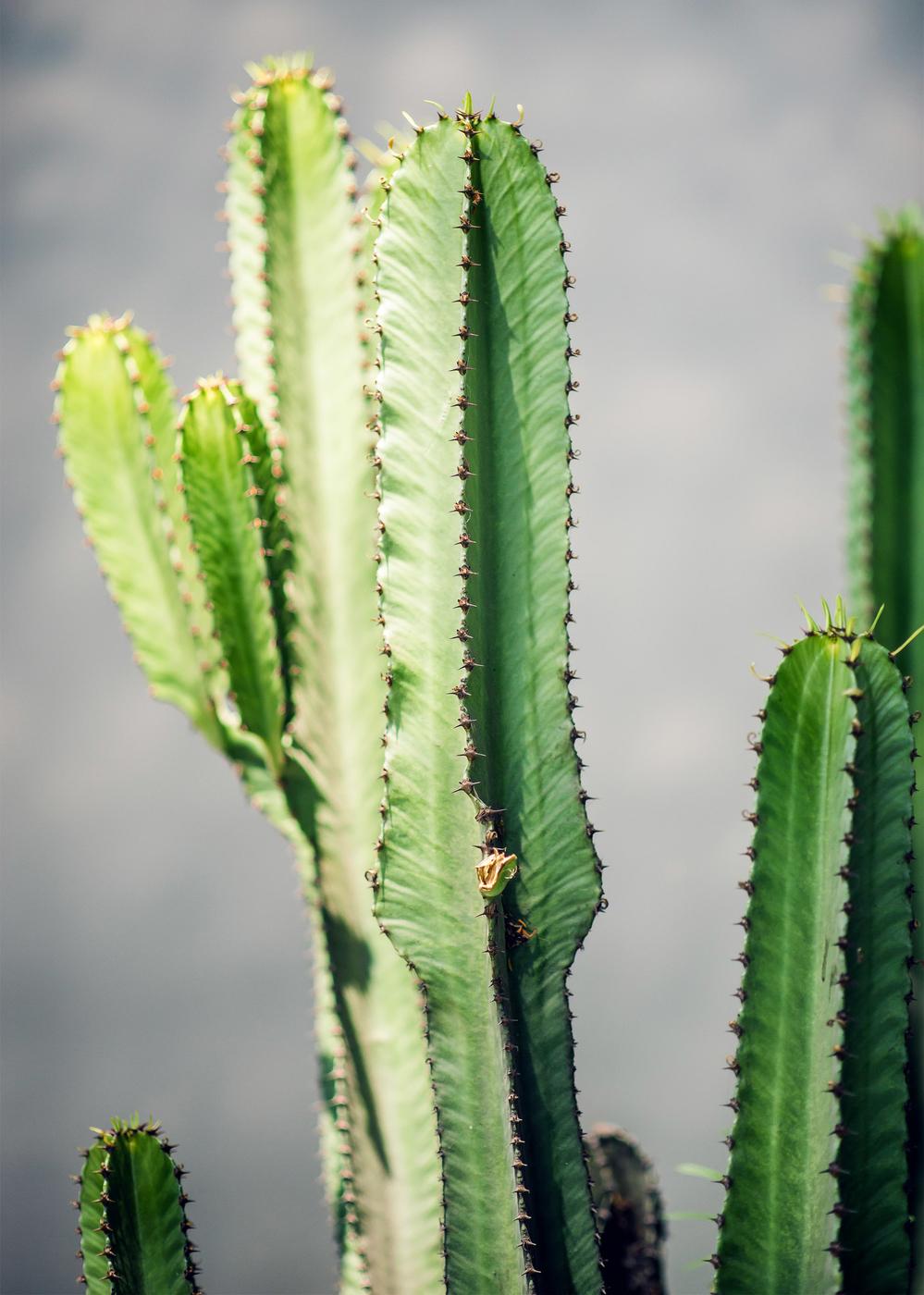 cactus0.jpg