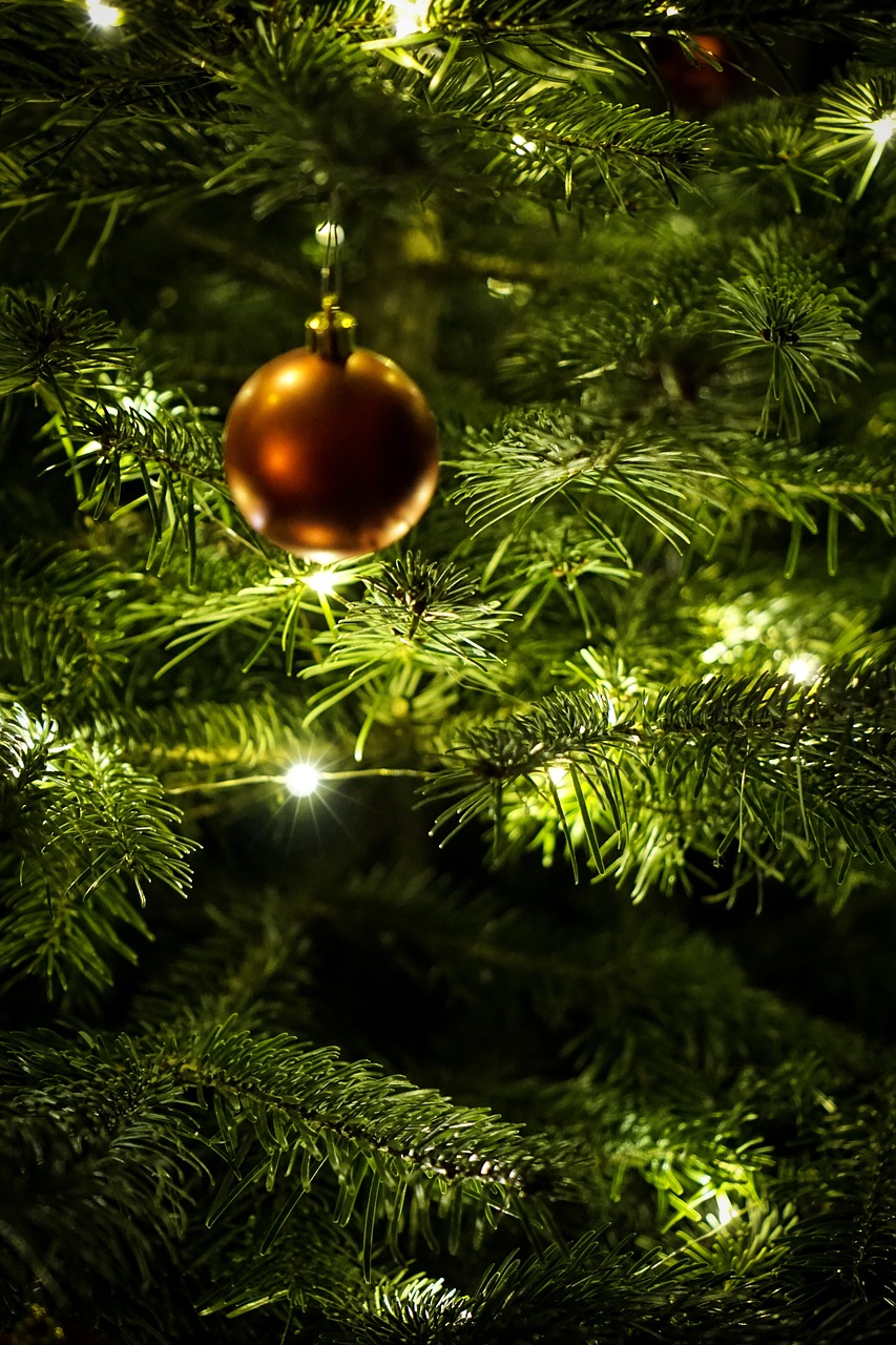 christmas-2015729_1280.jpg