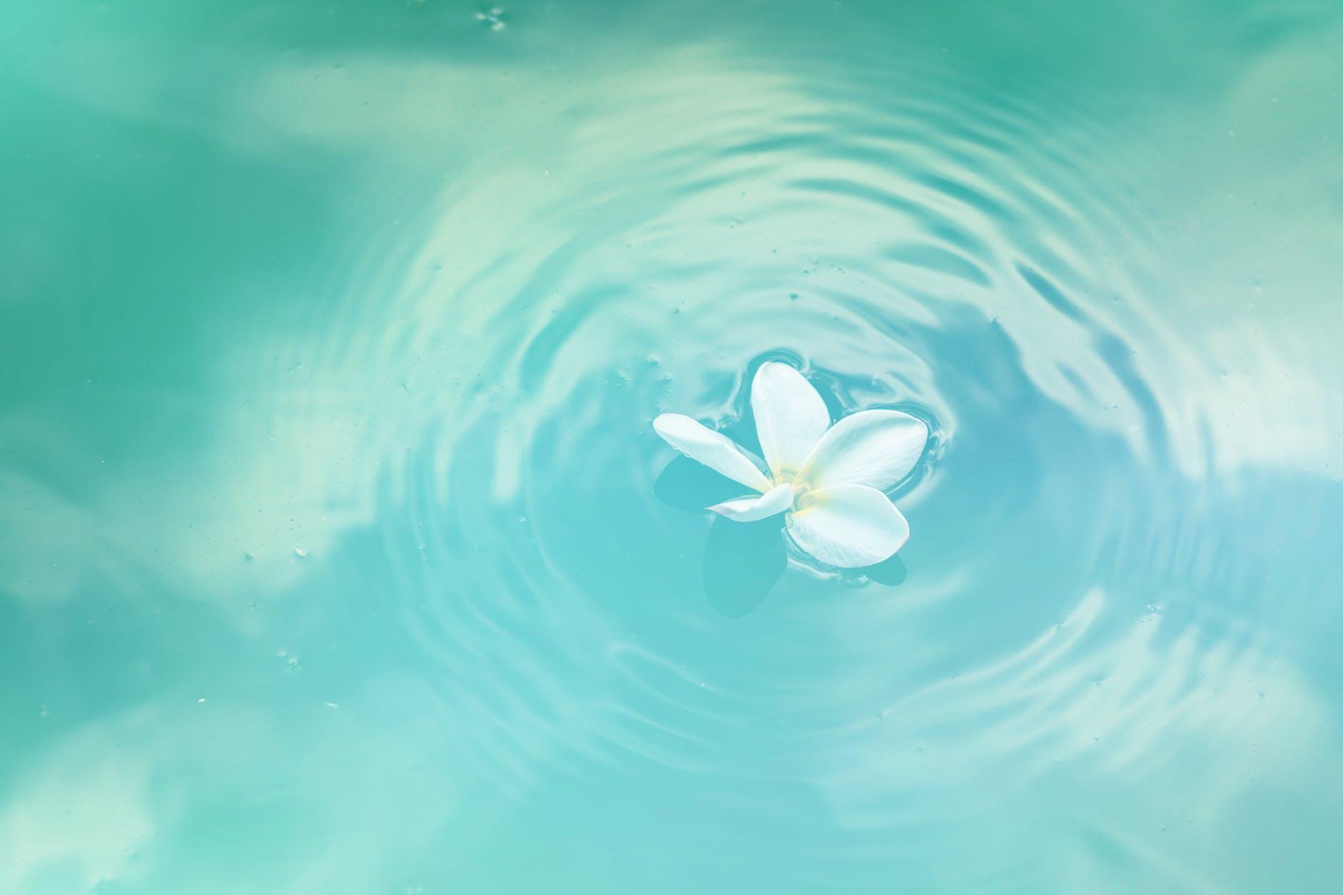 kukka_vedessa.jpeg