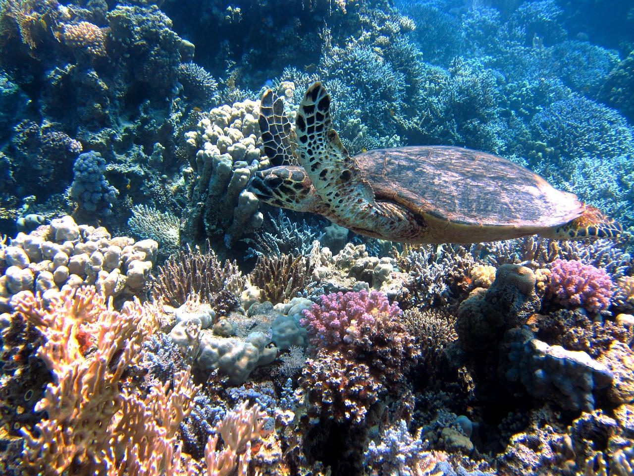 turtle-185484_1280.jpg