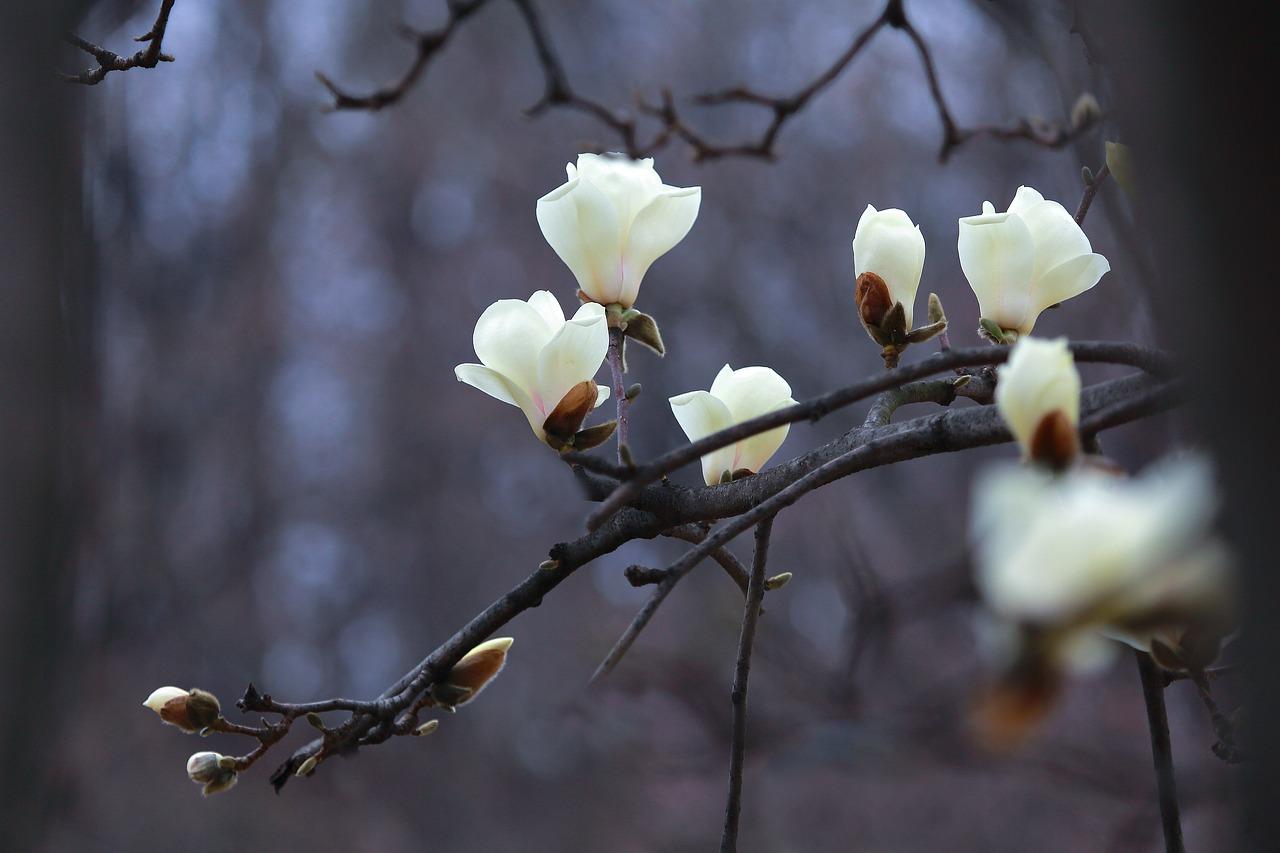 nature-3241334_1280.jpg