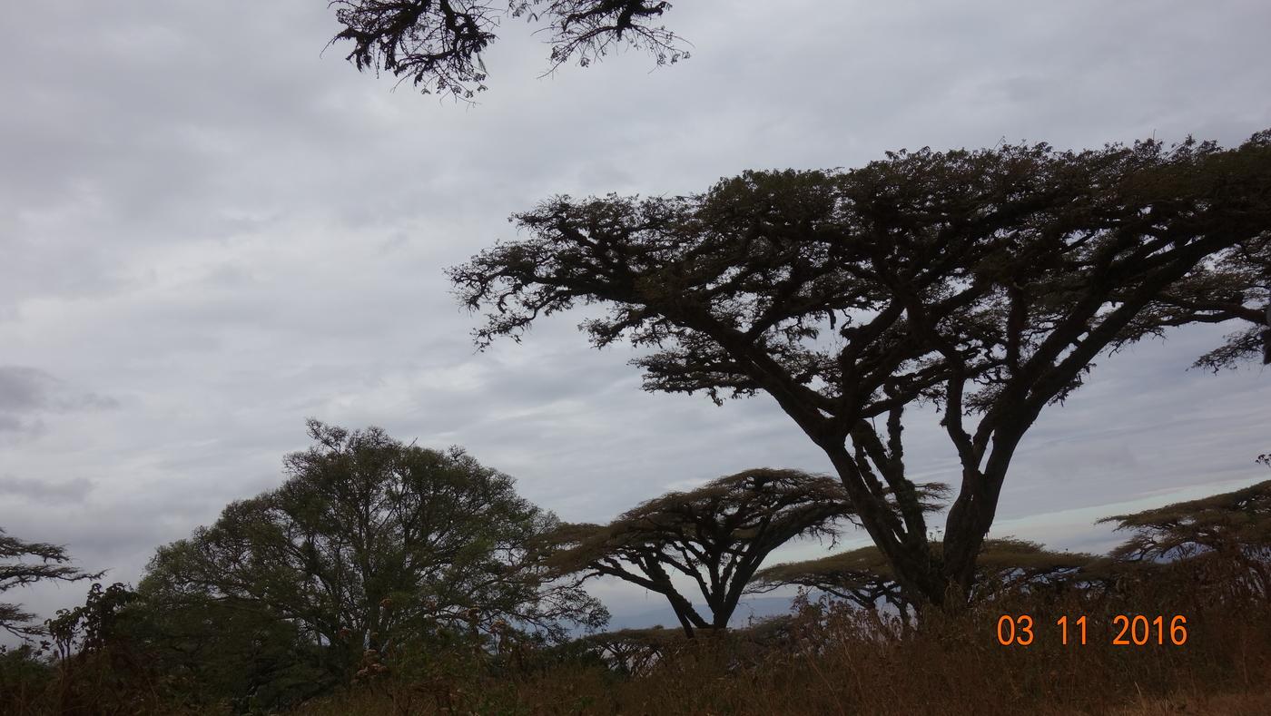 Kilimanjaro 226.JPG