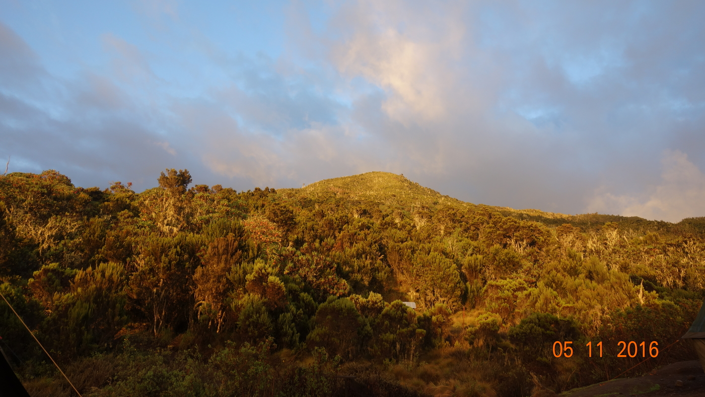Kilimanjaro 376.JPG