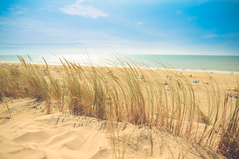 sea-beach-sand-sun.jpg