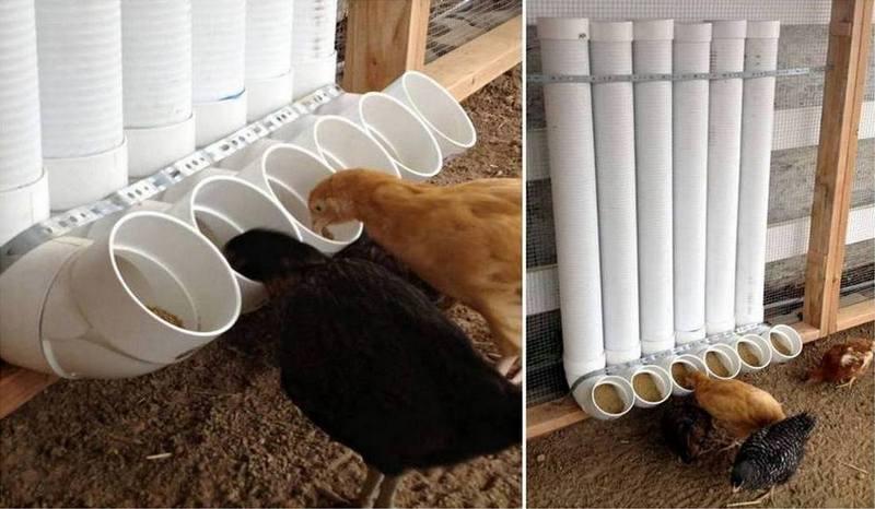 ChickenFeederOBN.jpg