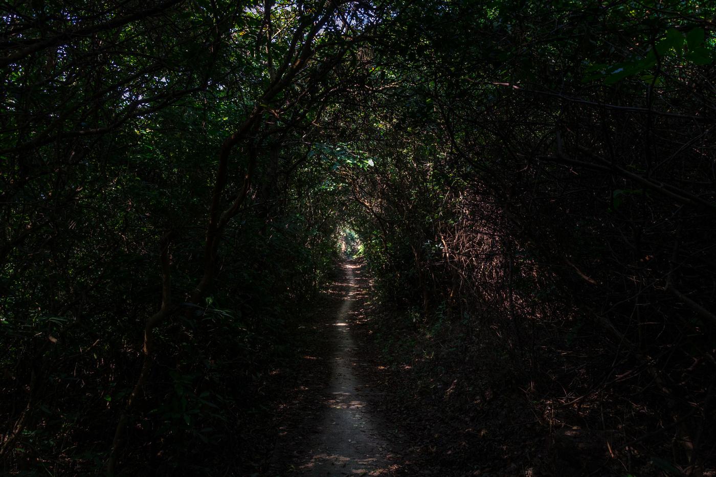 lantau-trail-5.jpg