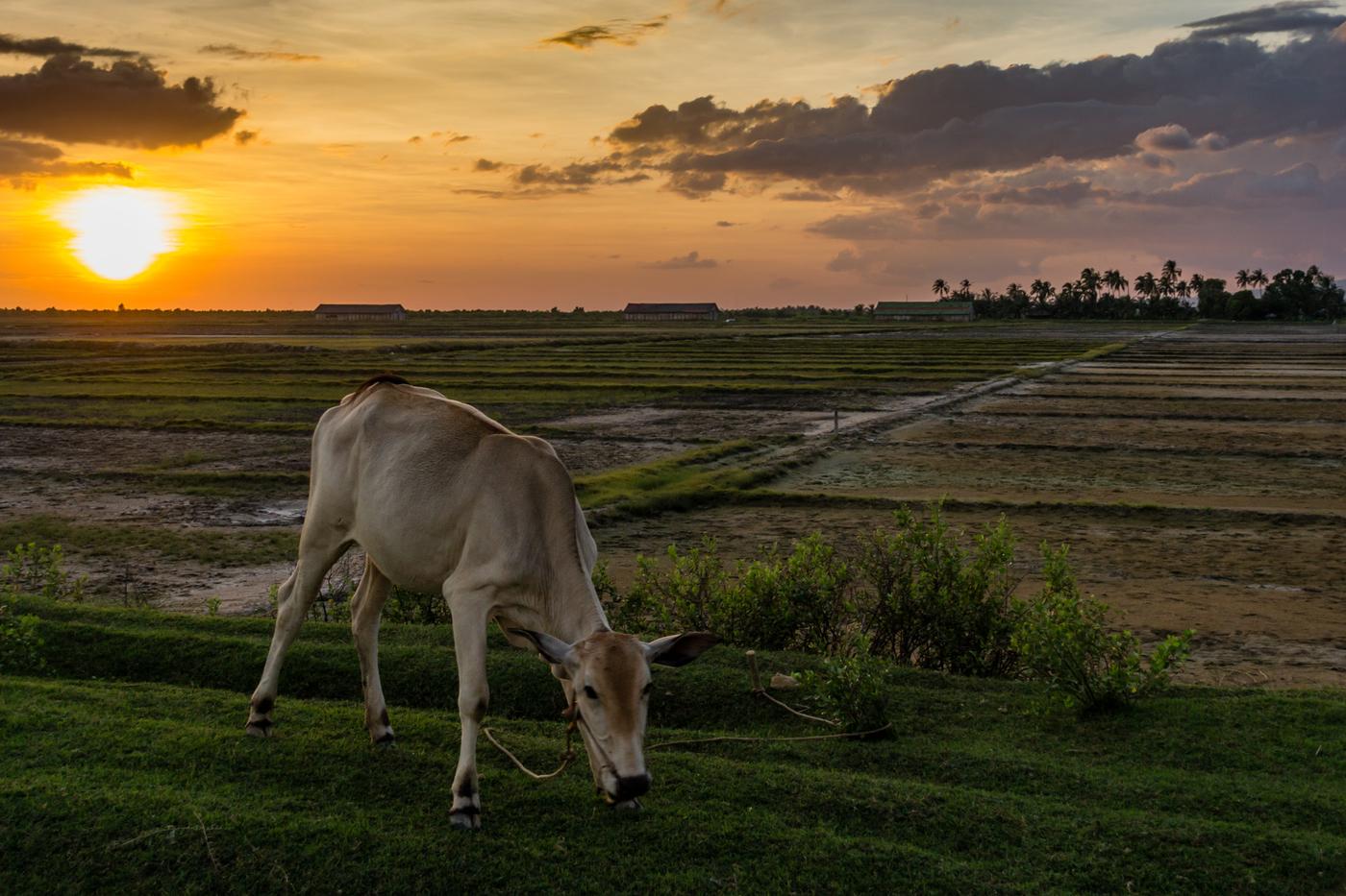 Kampot-85.jpg