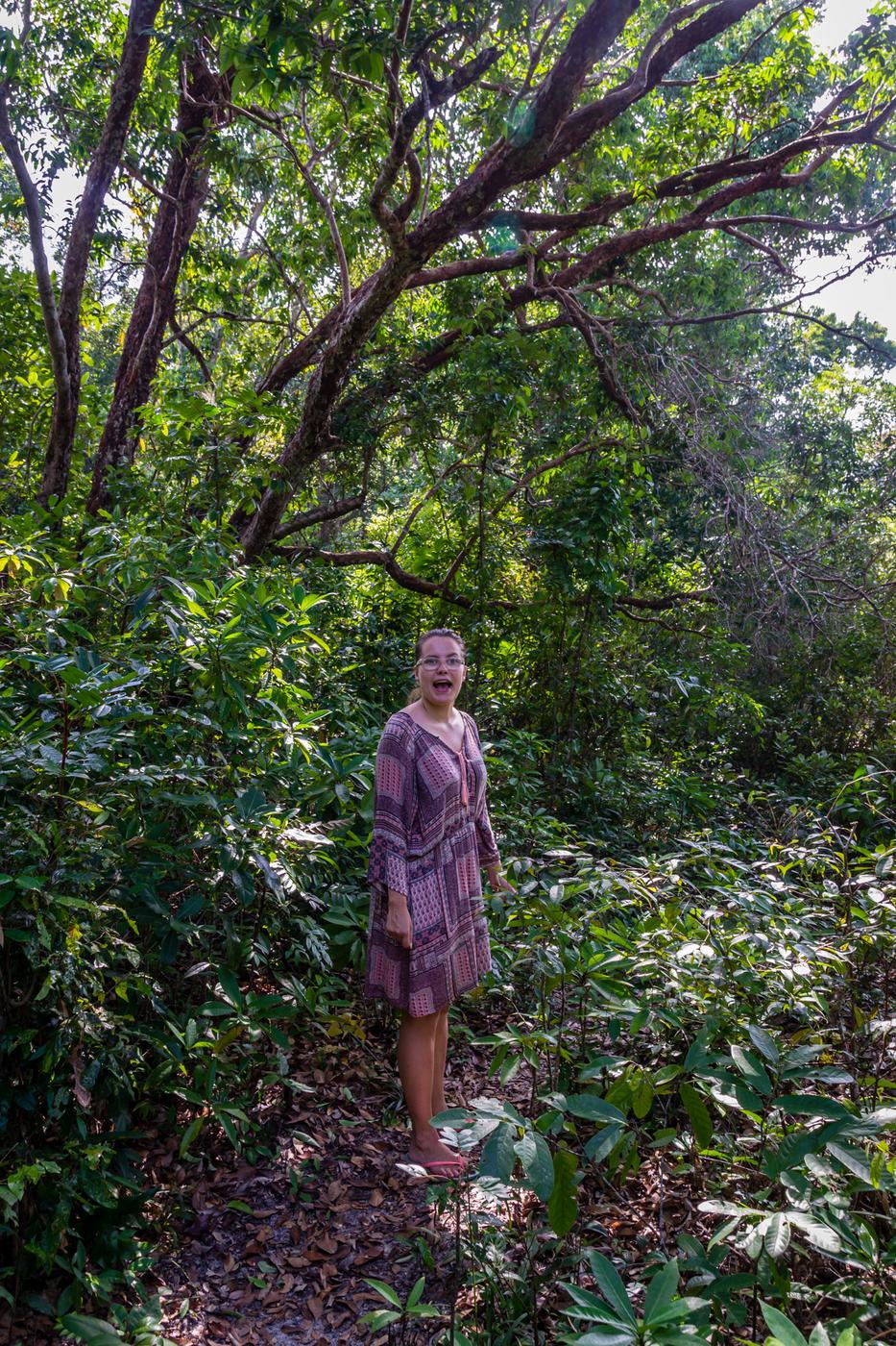 koh-ta-kiev-viidakko.jpg