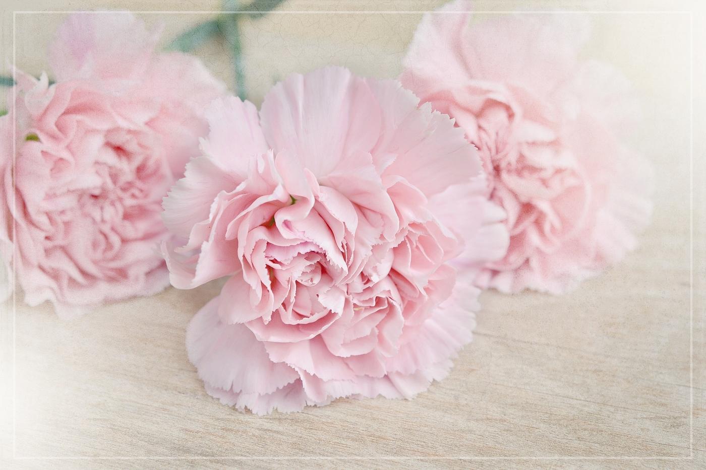 flowers-1363668_1920.jpg