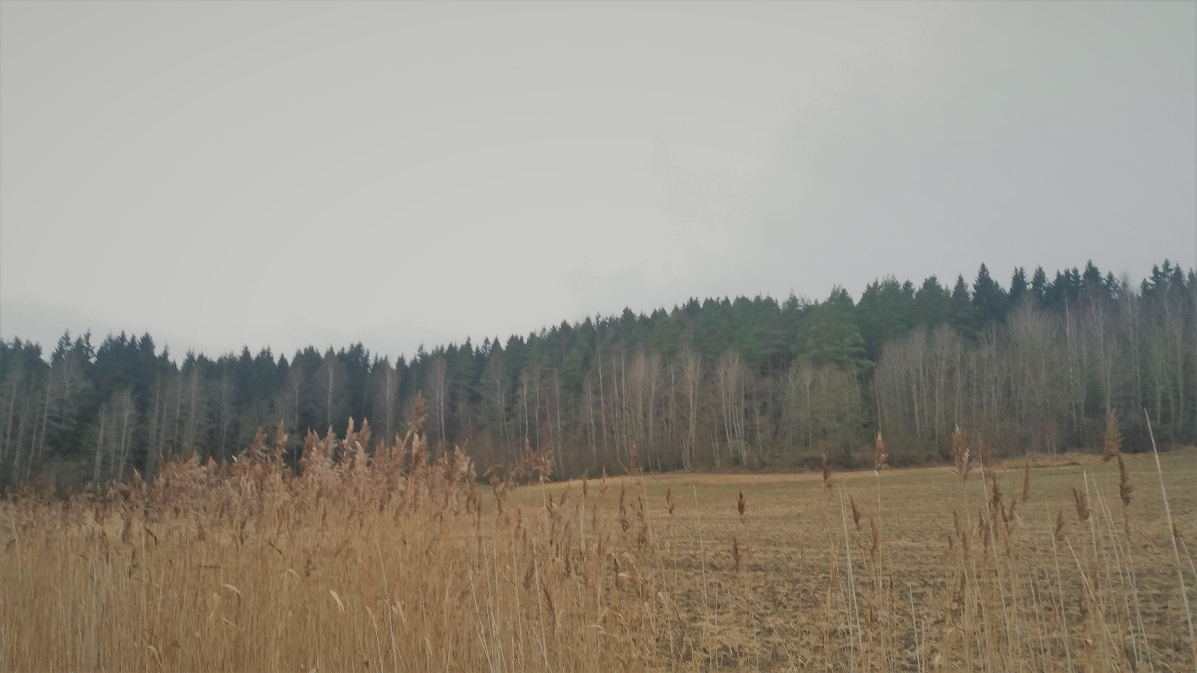 harmaa talvipäivä pellonreunalla