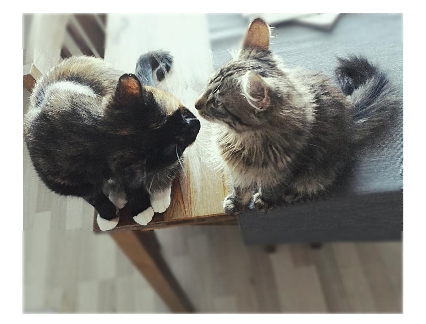 BLOGI KISSAT.jpg