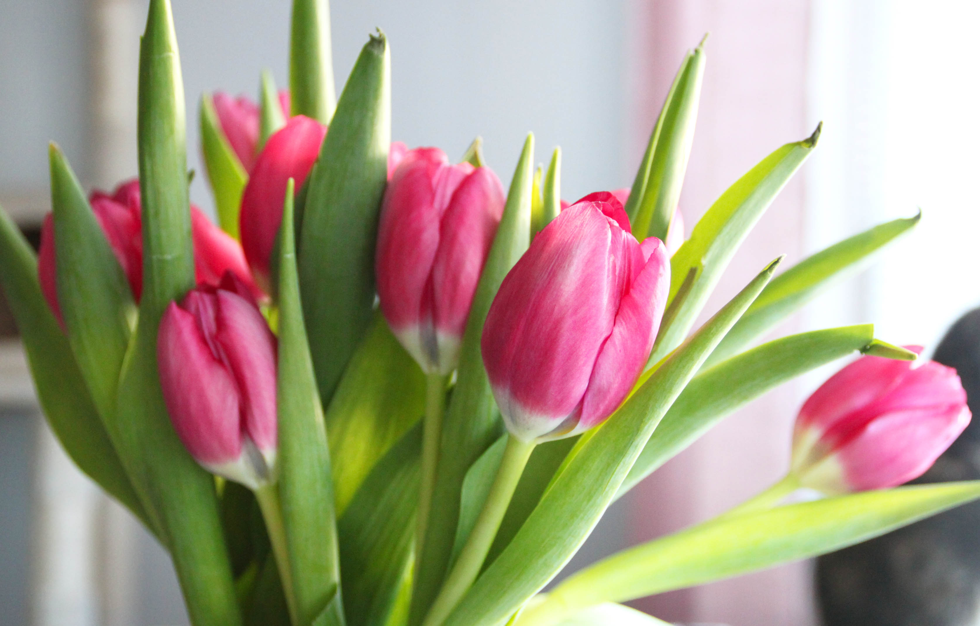 Kevät kotona