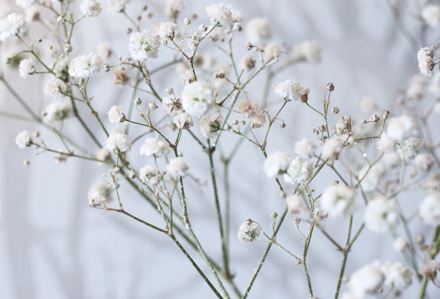wintery6.jpg