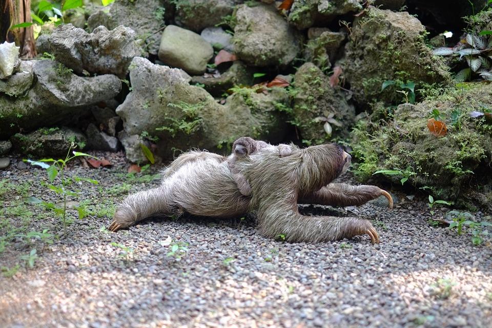 sloth-731297_960_720.jpg