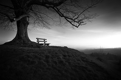 Solitude-Black-And-White-Tree-Bench-Landscape-753069.jpg