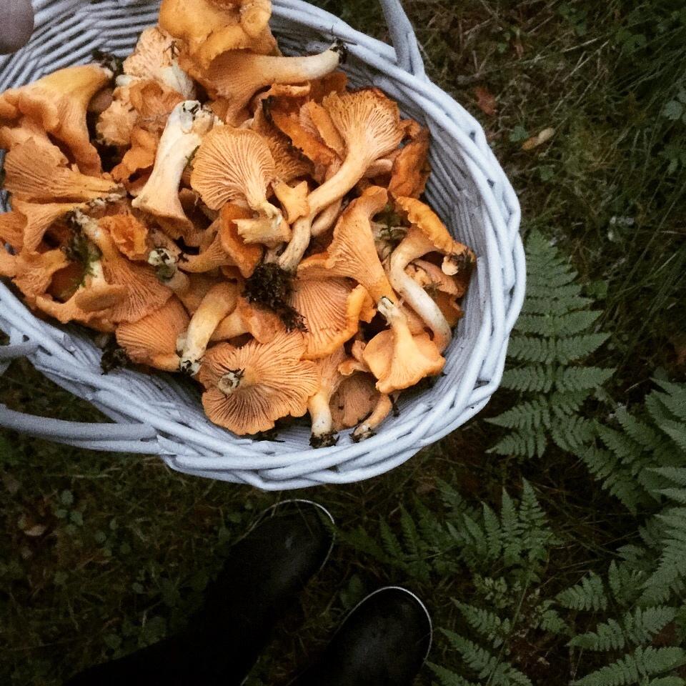 Viikonlopun sieniretki