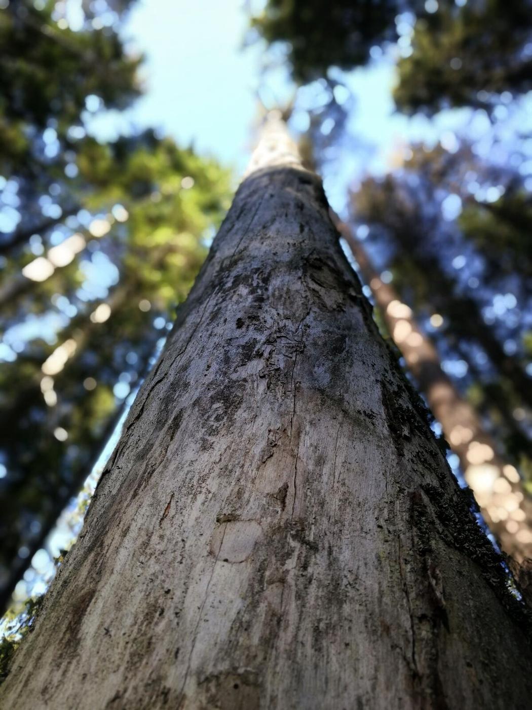 Sunnuntai Pukkipalon metsissä