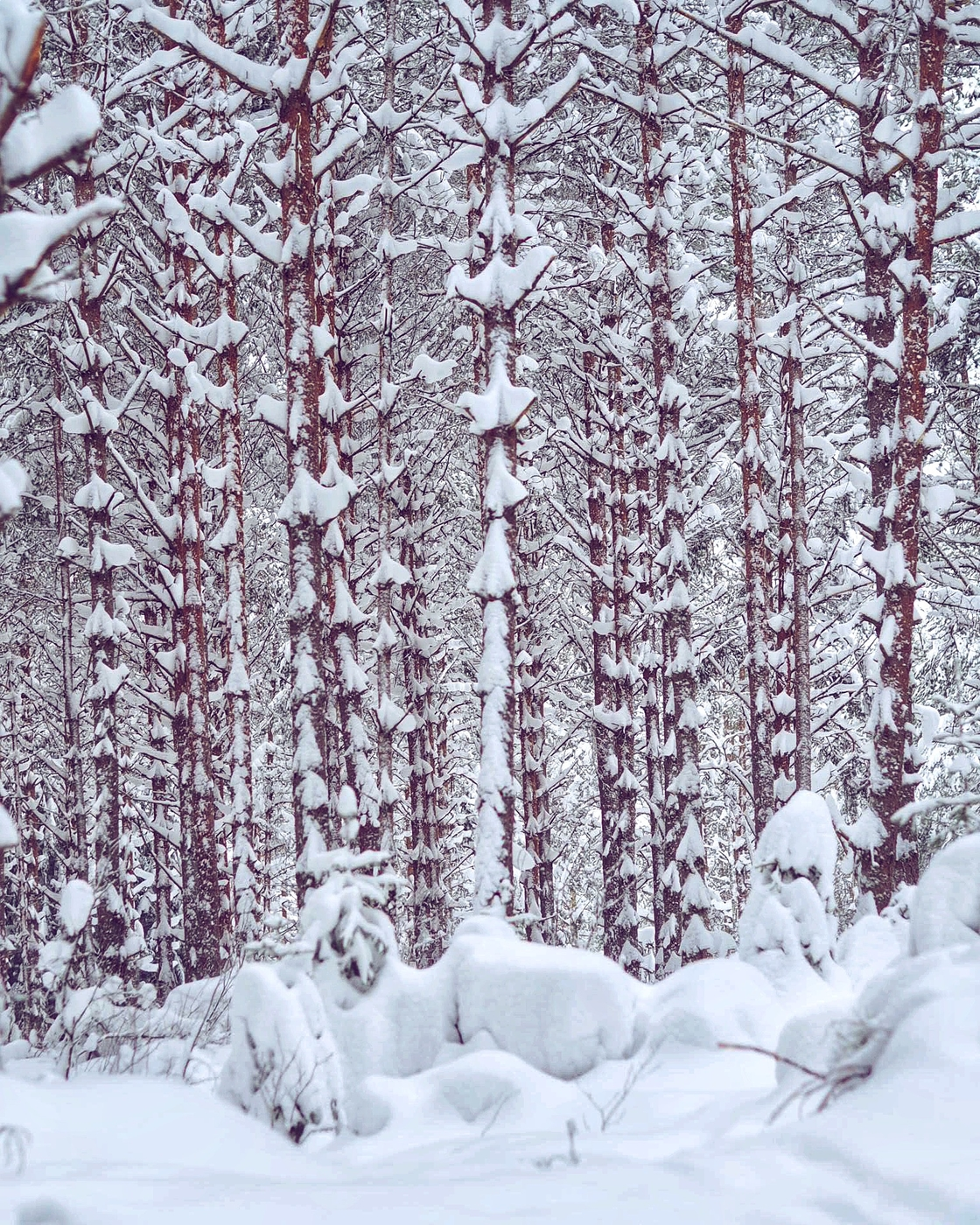 Viikonlopun hiihtoretket kansallispuistossa