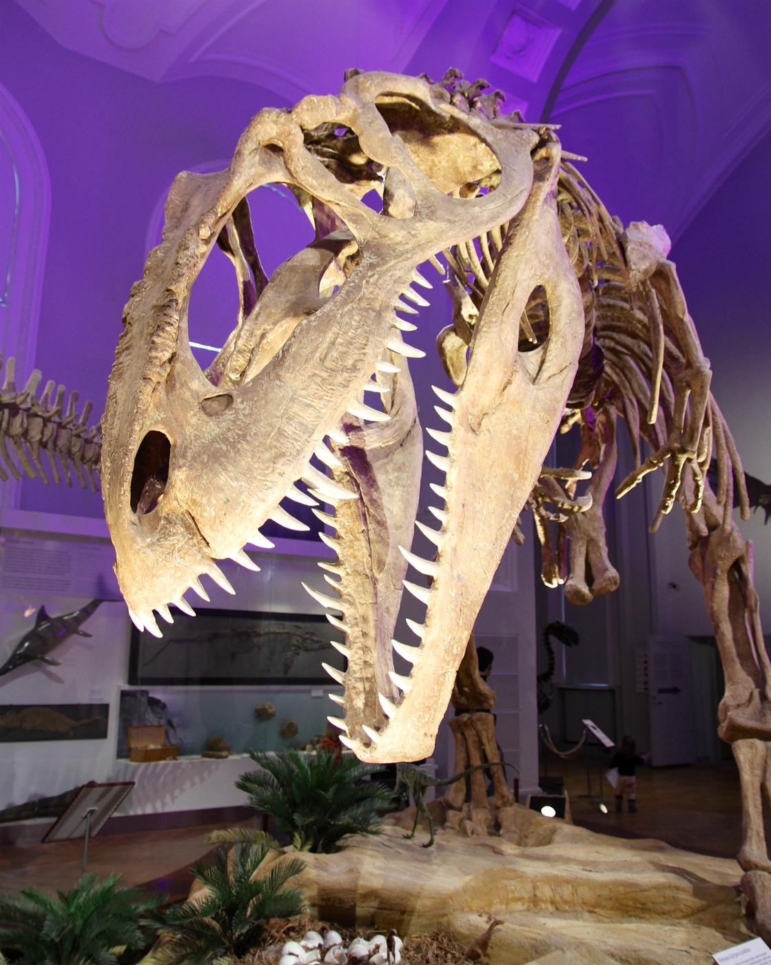 Museokortilla vihdoin Eläinmuseoon!