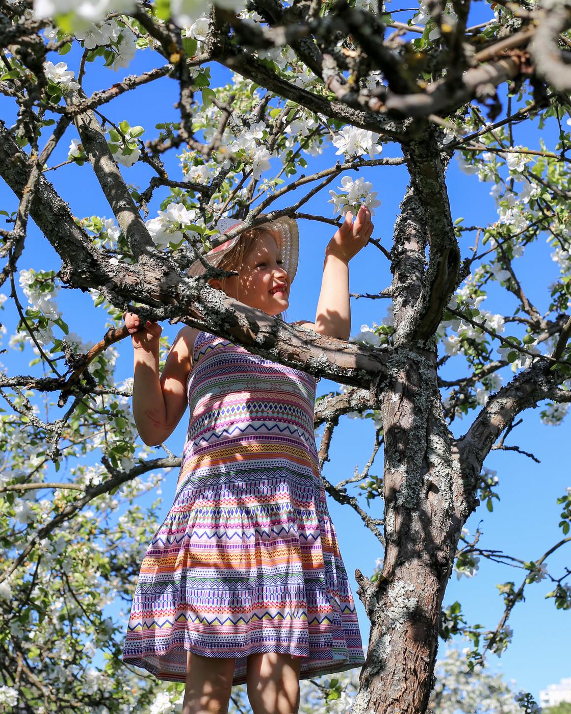 Herttoniemen siirtolapuutarha - Omenapuut kukkivat - 17.jpg