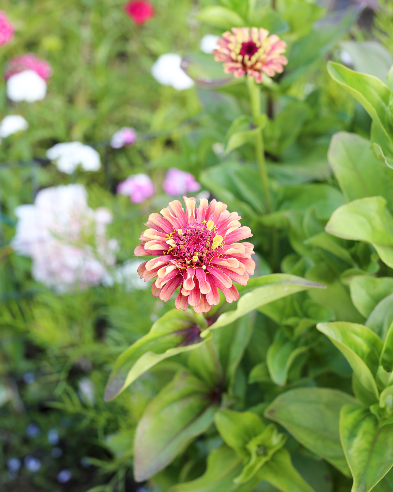 Kesäkuun loppu puutarhamökillä-16.jpg