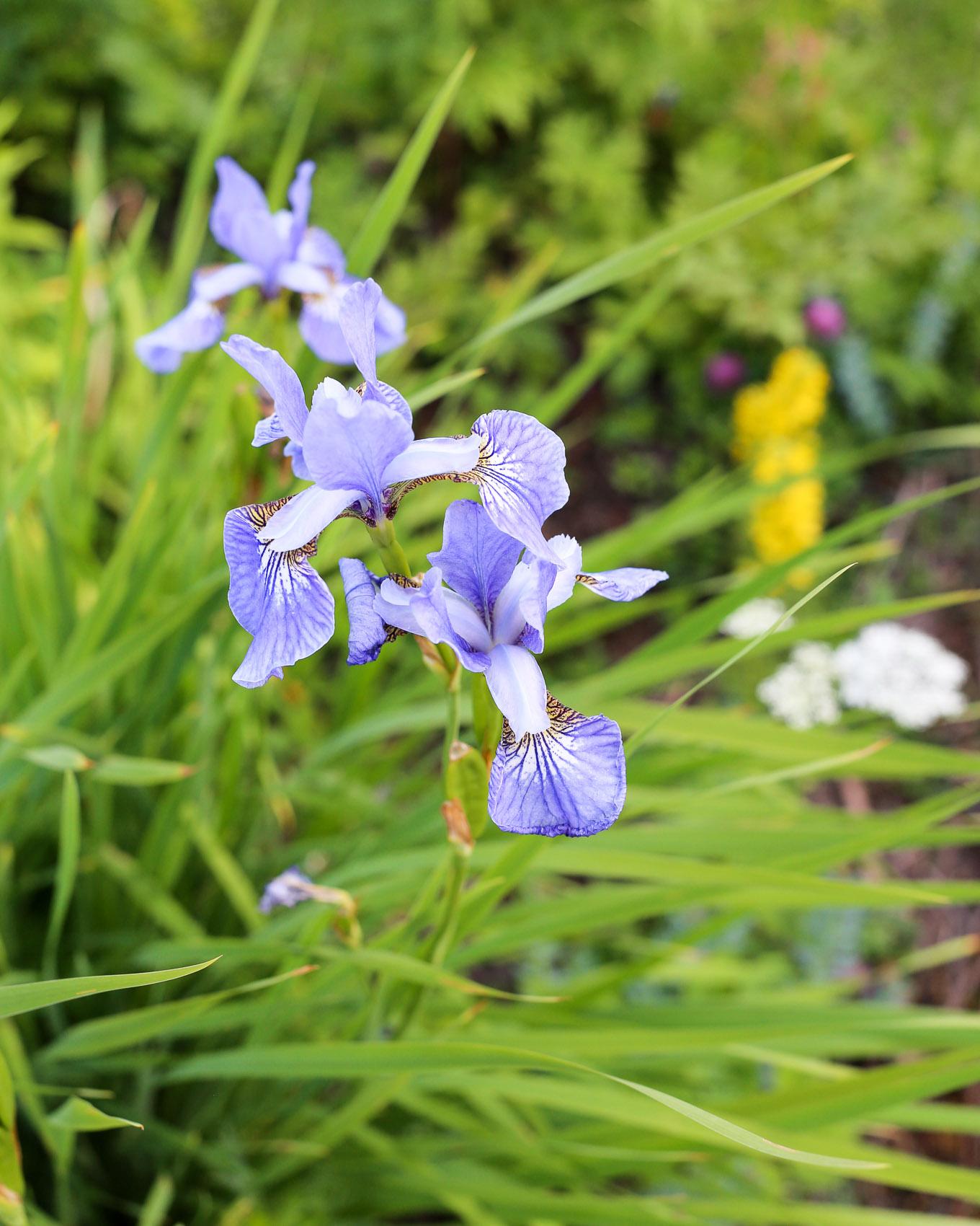 Kesäkuun loppu puutarhamökillä-21.jpg