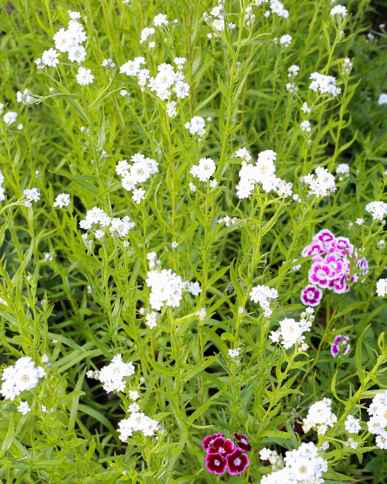 Kesäkuun loppu puutarhamökillä-8.jpg