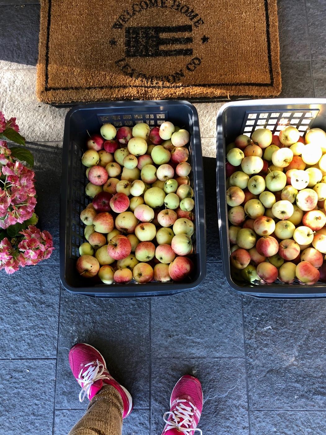 Omenoiden matka kotoa mehustamoon.jpg