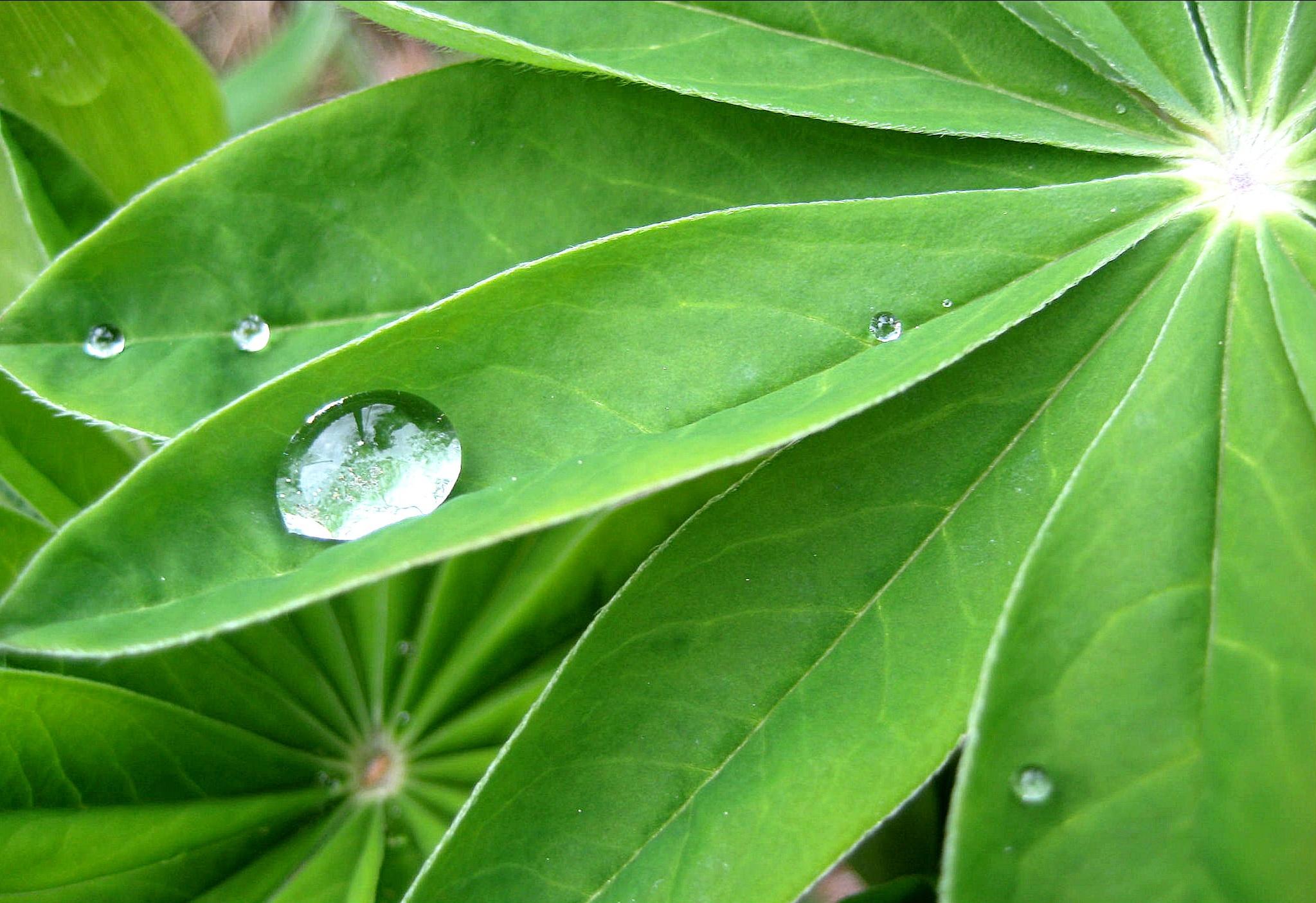 Vihreä.jpg